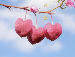 String of hearts by aussiegall at Flickr